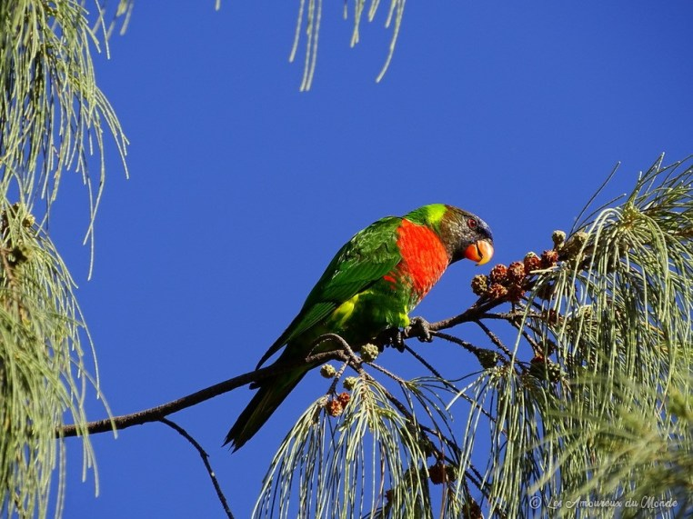 oiseau au Centre Culturel Tjibaou en Nouvelle-Calédonie