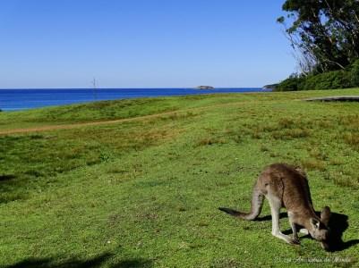 Pebbly Beach - Australie