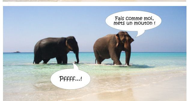 elephant_humour_coupe_menstruelle