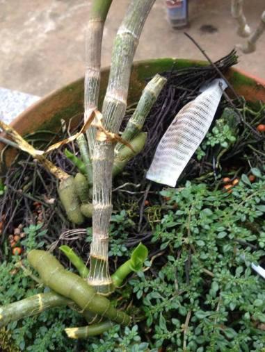 Image result for bột ươm keiki
