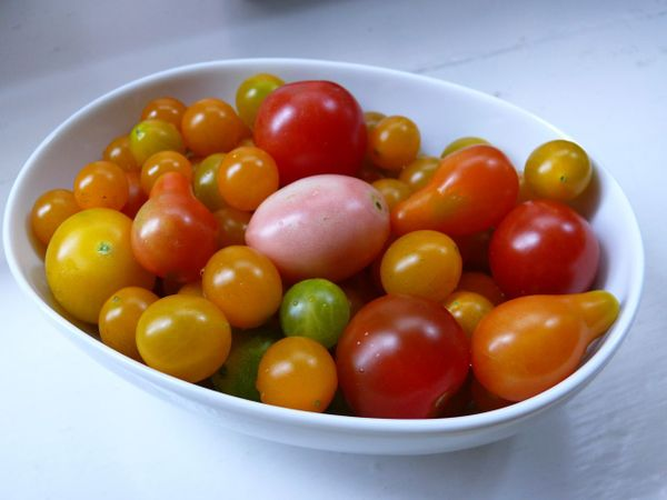 heirloom grape and cherry tomatoes