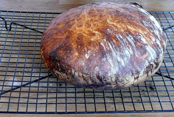 no-knead bread success