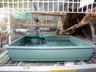 bassin_voliere_caiques