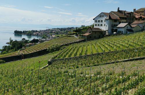 La randonnée dans les Terrasses de Lavaux entre Cully est splendide. Des vignes à perte de vue avec en toile de fond le lac Léman.