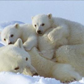 Ordonnance  sur la protection des animaux