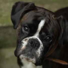 Si on vous revoit avec un chien, retour en prison!