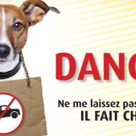 Pour protéger un chien, elle tient tête à la police