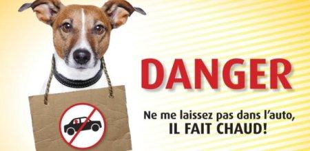 Danger-ne-laissez-pas-votre-chien-dans-la-voiture