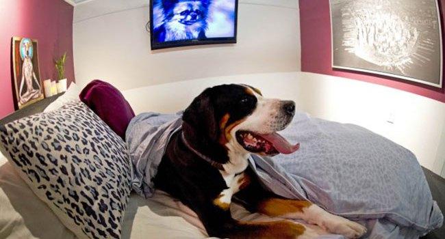 Hôtels acceptants les chiens en suisse