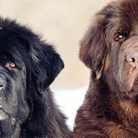 5 races de chiens aux pattes palmées