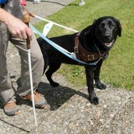 Une 5e école pour chiens guides d'aveugle en Suisse