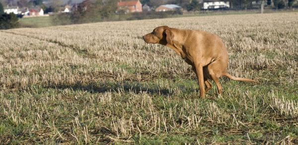 Crottes dans les champs: proprios rappelés à la loi