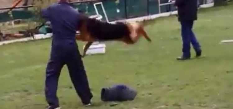 Un éducateur canin maltraite un chien et s'attire les foudres du web