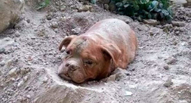 Chien enterré vivant: huit mois avec sursis