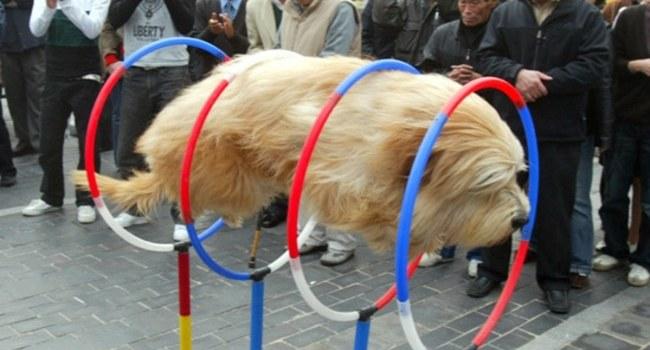 30 incroyables photos de chiens prises au moment parfait