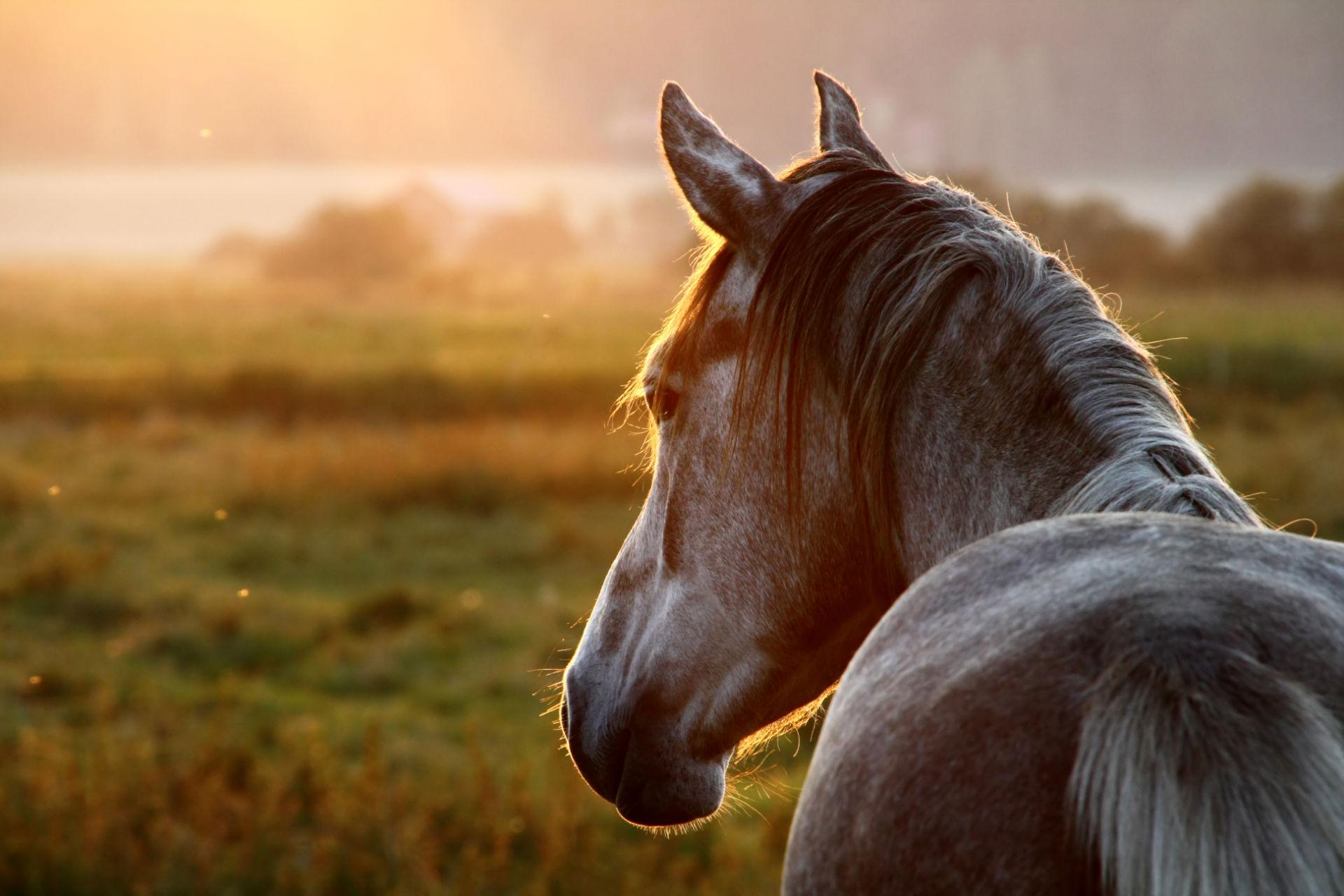 Accueil - Les chevaux de Dana