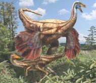 I dinosauri piumati del Canada e l'origine delle ali