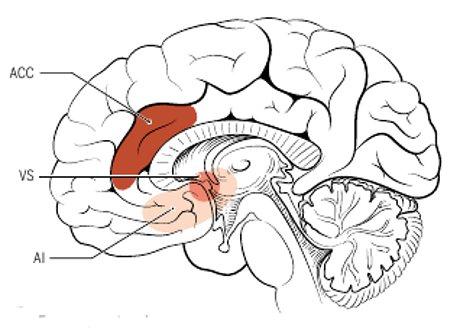 Connessioni cerebrali diverse per due forme di altruismo