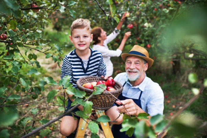Pourquoi reprendre l'exploitation familiale ? Entretien avec une agricultrice.