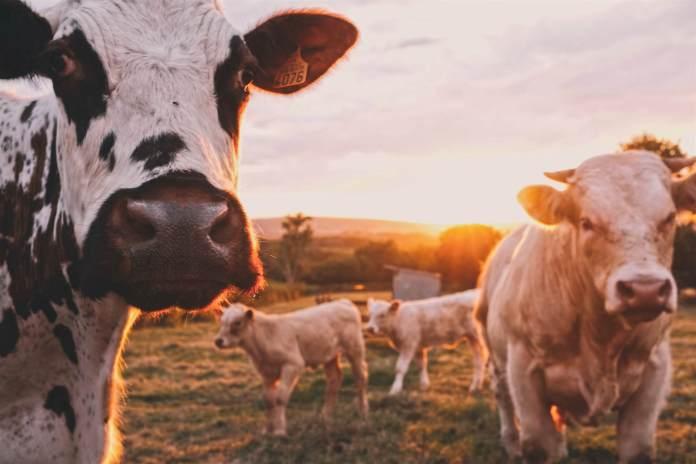 La Semaine de l'agriculture a commencé !