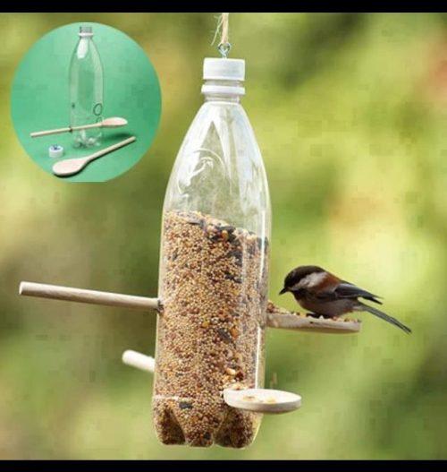 Oiseaux - les nourrir en hiver