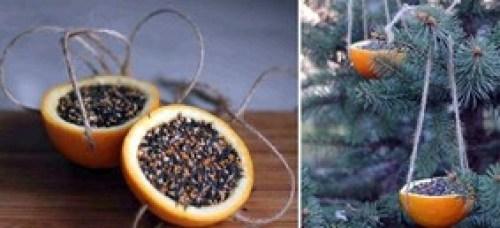 Oranges - mangeoires