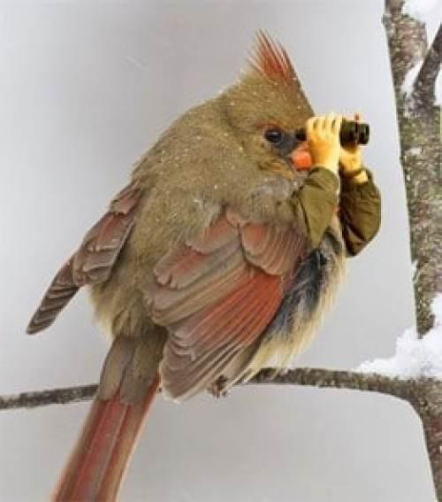 Oiseaux - Chercher la nourriture
