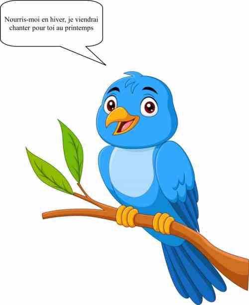 Oiseaux - aidons-les