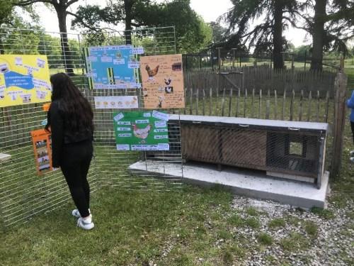 Eco-SChools - Le poulailler