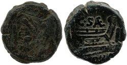 681SA – As C.Saenius