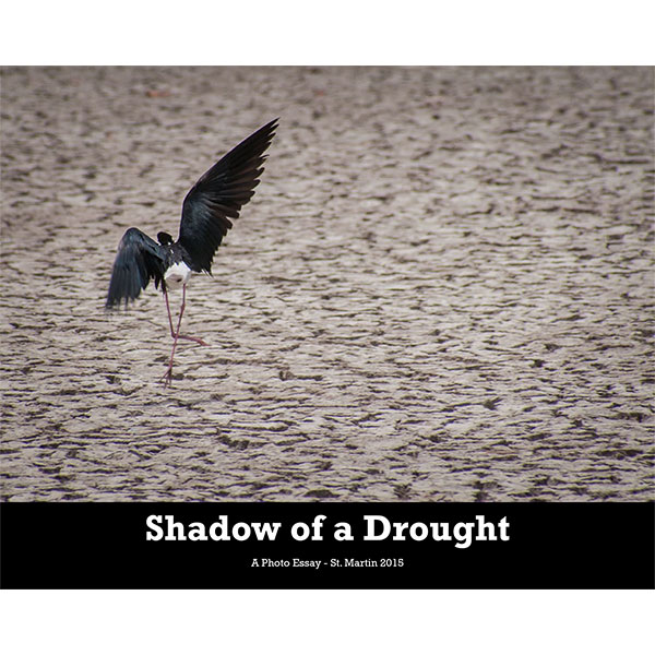 Shadow-of-a-Drought-HomePageSquare