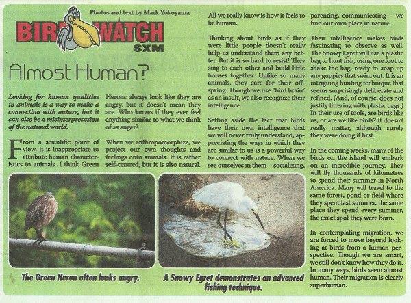 BirdWatch-AlmostHuman-web
