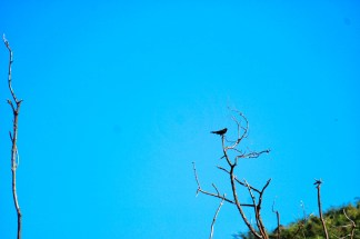Tim_Sny_Birds_04