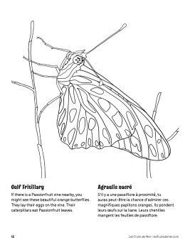 AAM-Gulf-Fritillary