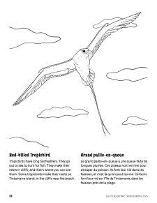 AAM-Tropicbird