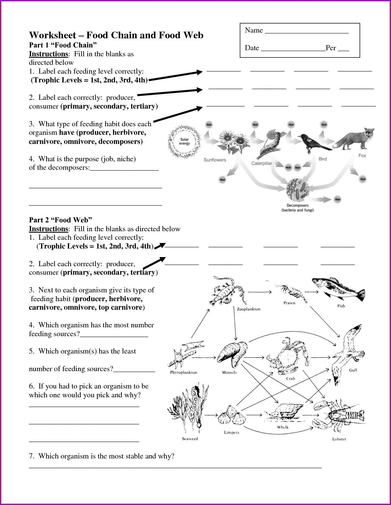 Cell Theory Timeline Review Worksheet Answer Key