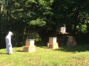 abeilles des hauts des saulies