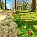 Tulipes multicolores maison d'hôtes les hauts de saulies