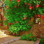 Mur fleuri maison d'hôtes les hauts de saulies
