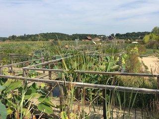 plantes aquatiques du jardin d'eau
