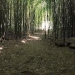 bambouseraie des jardins d'eau