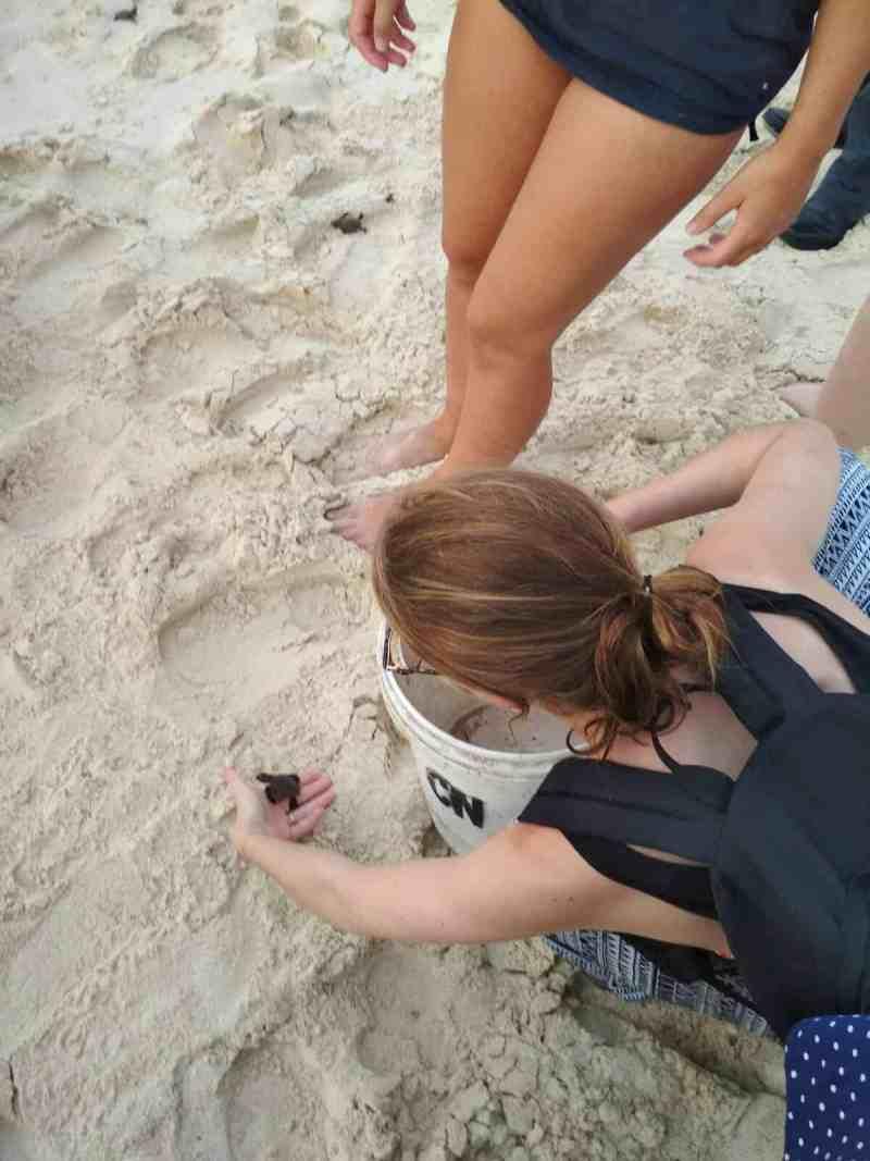 Les Heureux Voyageurs relâchent des tortues à Karimunjawa, Indonésie