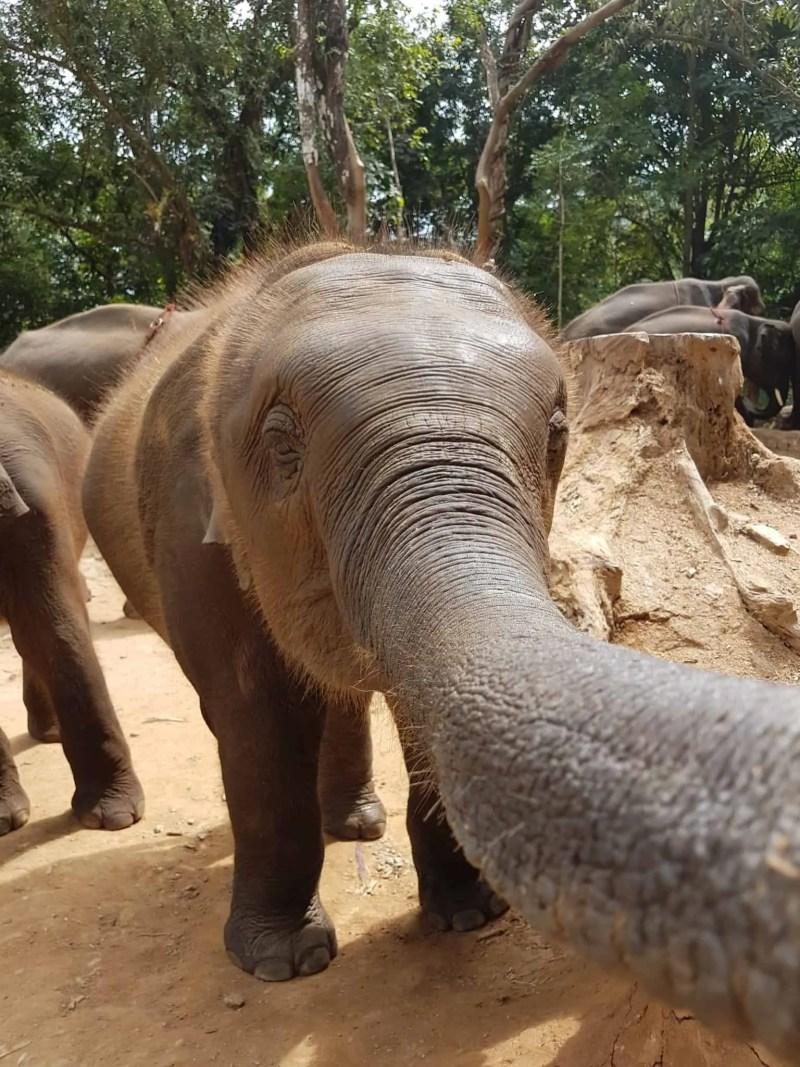Thaïlande, tour en quad et rencontre imprévue avec les éléphants 🐘 12
