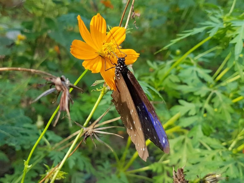 Cambodge, Kep et sa ferme aux papillons 🦋 26