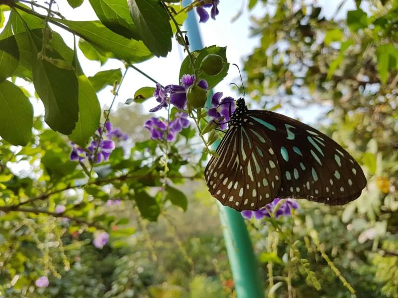 Cambodge, Kep et sa ferme aux papillons 🦋 29