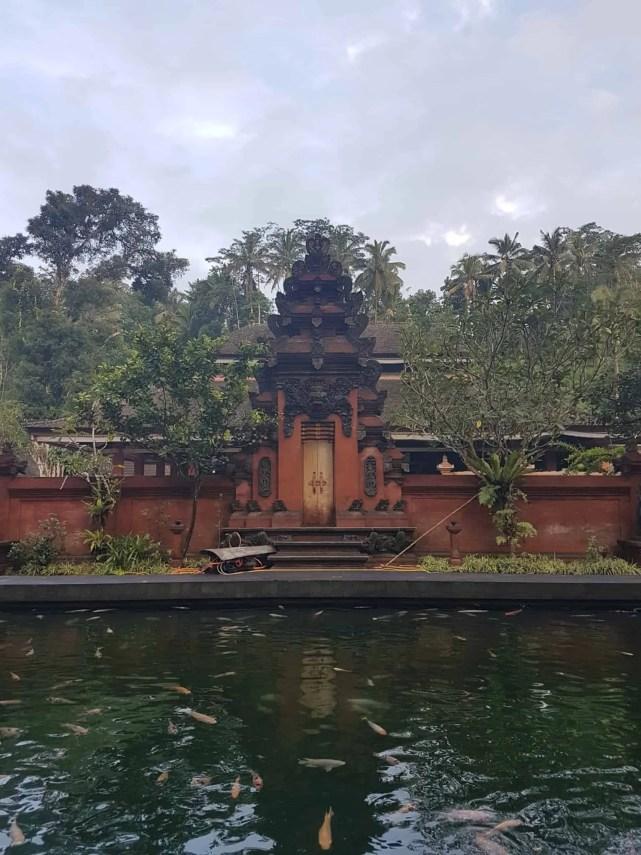 Bali, les rizières de Tegallalang et le temple Pura Tirta Empul🌱 21