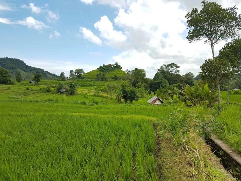 Bali, le joli et atypique temple Goa Gajah 🛕 8