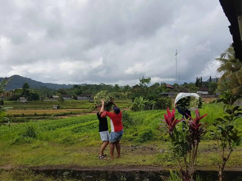 Bali, le joli et atypique temple Goa Gajah 🛕 13