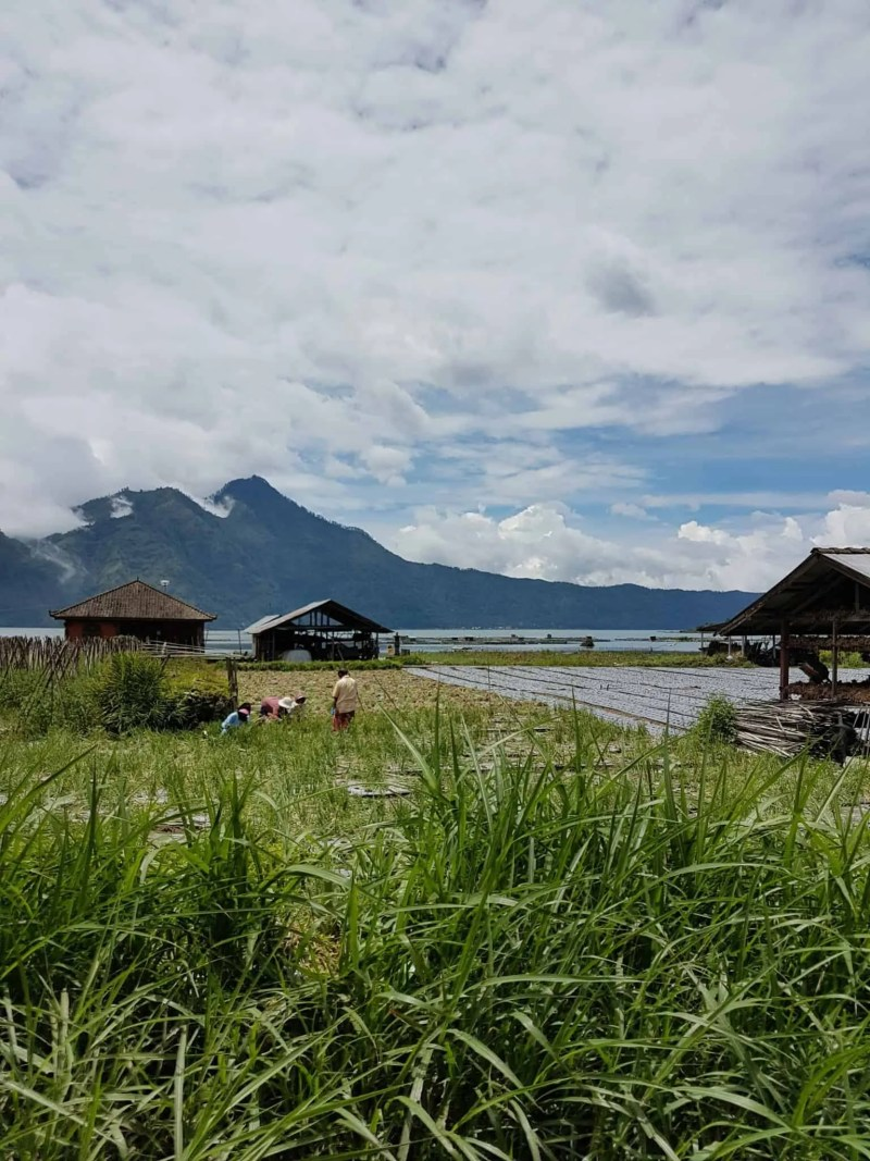 Bali, roadtrip en scooter direction le lac Danau Batur 💧 7