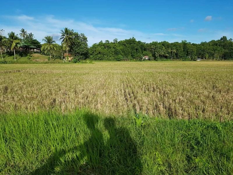 Philippines, visite du sanctuaire des tarsiers 🐒 2